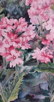 pink verbena