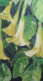 yellow-angel-trumpet