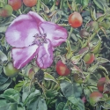 Pink Rose Hips