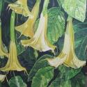 Yellow Angel's Trumpet Flowers